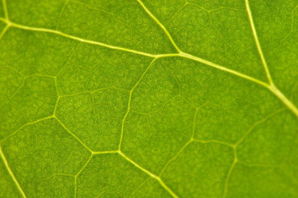 Zoom su foglia verde